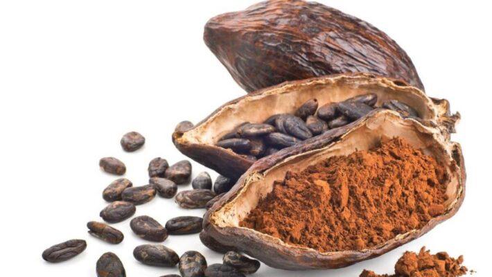 Socola được sản xuất như thế nào từ hạt cacao?