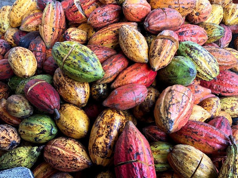 Cacao được lựa chọn kỹ lưỡng đảm bảo chất lượng